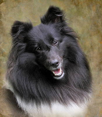 Photograph - Sheltie Princess by Angie Vogel