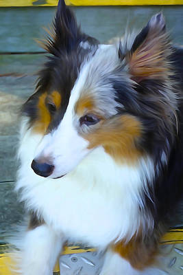 Photograph - Sheltie In Watercolor by Charlie and Norma Brock