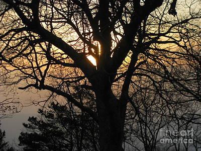 Photograph - Shenandoah 4 by Fred  Sheridan