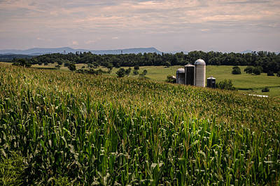 Photograph - Shenandoah Corn by Pat Scanlon