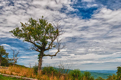 Photograph - Shenandoah National Park 16554c by Guy Whiteley