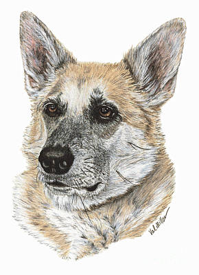 Drawing - Shepherd Beauty by Val Miller