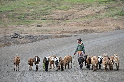 Shepherd With Flock Near Debark Art Print by Tony Camacho
