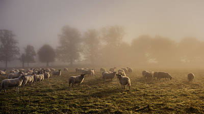 Trust Photograph - Shepherding by Chris Fletcher