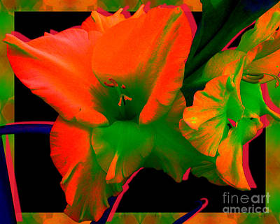 Sherbert Gladiolus Art Print by Margaret Newcomb