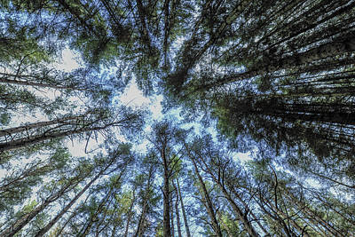Photograph - Sherwood Forest by Terry Cosgrave