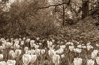 Photograph - Sherwood Gardens 1 by Chris Scroggins