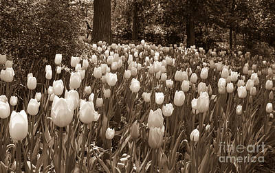 Photograph - Sherwood Gardens 2 by Chris Scroggins