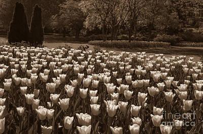 Sherwood Gardens 3 Print by Chris Scroggins