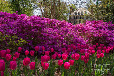 Photograph - Sherwood Gardens 5 by Chris Scroggins