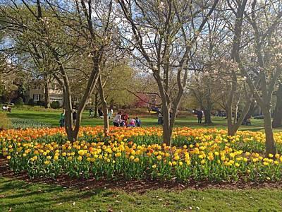 Sherwood Gardens Yellow Tulips Art Print