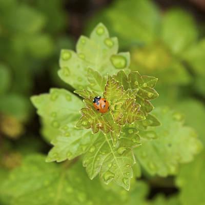 Photograph - She's A Lady - Lady Bug Photo by Jane Eleanor Nicholas