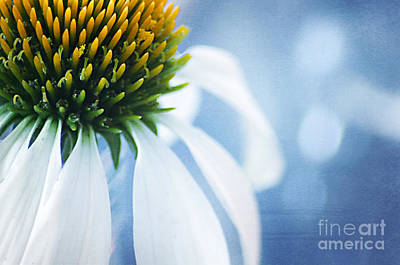 Healthcare And Medicine Photograph - She's A Little Blue by Darren Fisher