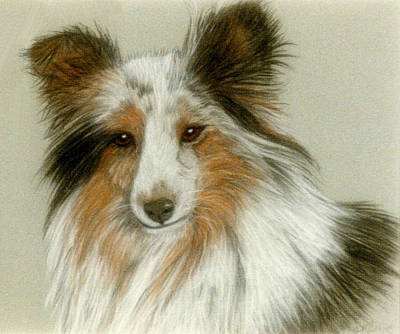 Pastel - Shetland Collie by Jan Amiss