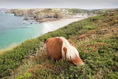 Shetland Ponies Print by Ashley Cooper