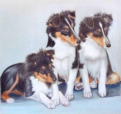 Shetland Sheepdog Puppies Art Print by Ruth Seal