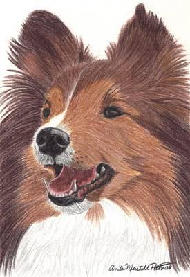 Shetland Sheepdog Vignette Art Print by Anita Putman