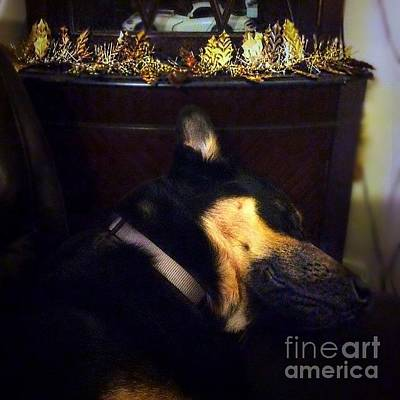 Gsd Wall Art - Photograph - Shhhhhh It's That Time Again.  #gsd by Isabella Shores