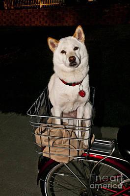 Japanese Dog Photograph - Shiba Inu Dog by William H. Mullins