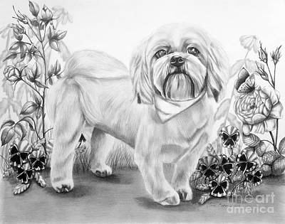 Pup Drawing - Shih Tzu In Black And White by Lena Auxier