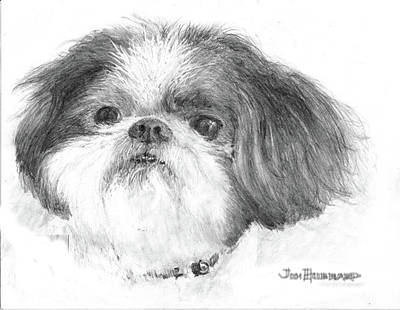 Shih-tzu Art Print by Jim Hubbard