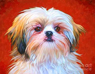 Shih Tzu Painting Art Print by Iain McDonald