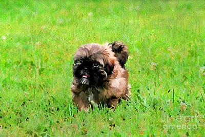 Best Friend Photograph - Shih Tzu Puppy by Darren Fisher