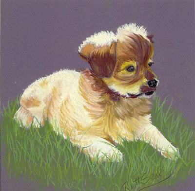 Painting - Shih Tzu Puppy by Ruth Seal
