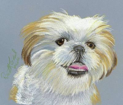 Shih Tzu Art Print by Ruth Seal