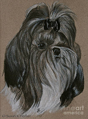 Drawing - Shih Tzu by Susan Herber