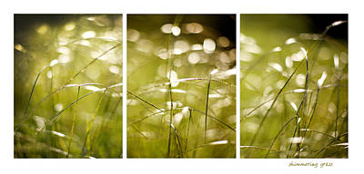 Photograph - Shimmer by Linde Townsend
