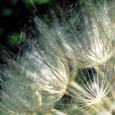 Photograph - Shimmering Golden Dandelion Macro by Julie Magers Soulen