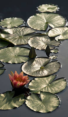 Photograph - Shimmering Lily Pads by Leda Robertson