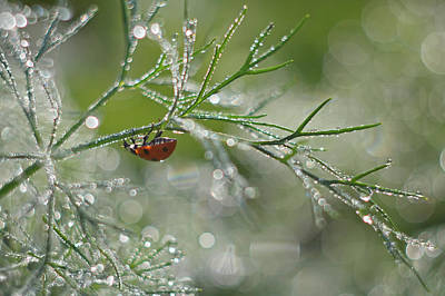 Dew Photograph - Shine Of Morning Bokeh by Elena Solovieva
