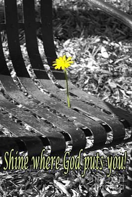 Photograph - Shine Where God Puts You by Sandra Clark
