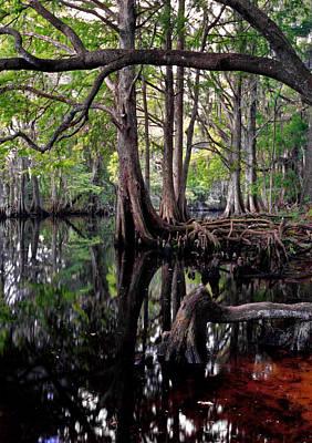 Photograph - Shingle Creek II. by Chris  Kusik