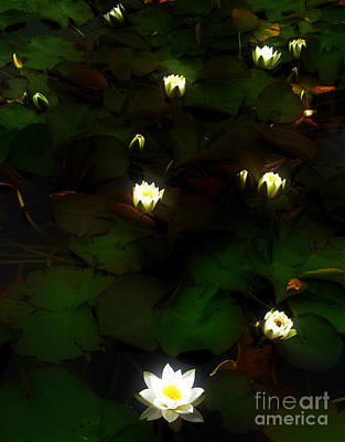 Photograph - White Waterlily Lamps by Nina Ficur Feenan