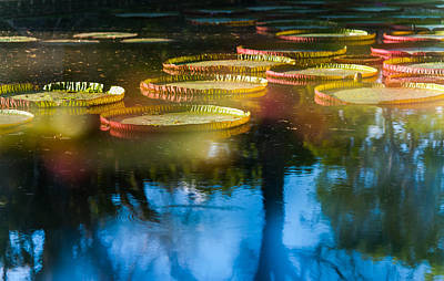 Shining Leaves Of Victoria Regia. Royal Botanical Garden In Mauritius. Impressionistic Print by Jenny Rainbow