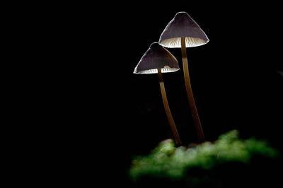 Wall Art - Photograph - Shining Mushrooms by Claus Puhlmann