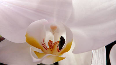 Photograph - Then Shining Orchid by Xueyin Chen
