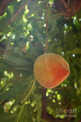 Photograph - Shining Peach by Kerri Mortenson
