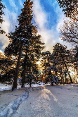 Snowy Night Photograph - Shining Through by Mark Papke