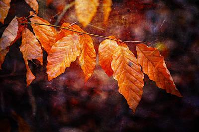Photograph - Shining Through The Dark Season by Randi Grace Nilsberg