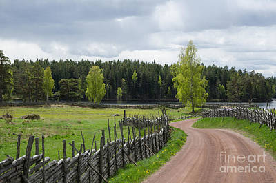 Photograph - Shiny Birches At Winding Gravel Road by Kennerth and Birgitta Kullman