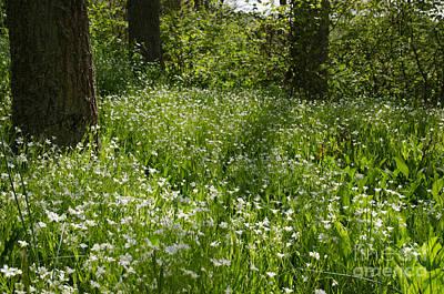 Photograph - Shiny Forest Glade by Kennerth and Birgitta Kullman
