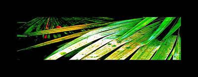 Photograph - Shiny Palm Leaves by Richard Erickson