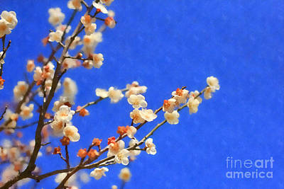 Early Spring Digital Art - Shiraume White Plum Blossoms And Blue Sky by Beverly Claire Kaiya