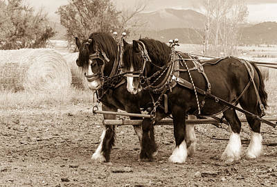 Photograph - Shires In Sepia by Fran Riley