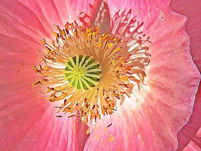 Photograph - Shirley Poppy With Oil Paint by Chris Berry
