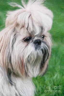 Shitsu Puppy Art Print by Aleksey Tugolukov